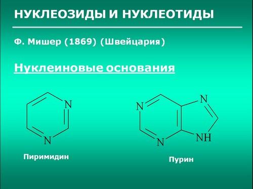нуклеиновые кислоты 10 класс